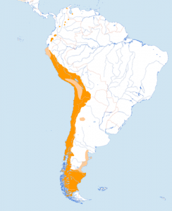 Leefgebied van de condor