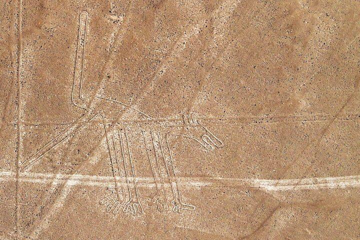 Nazca lijn: hond
