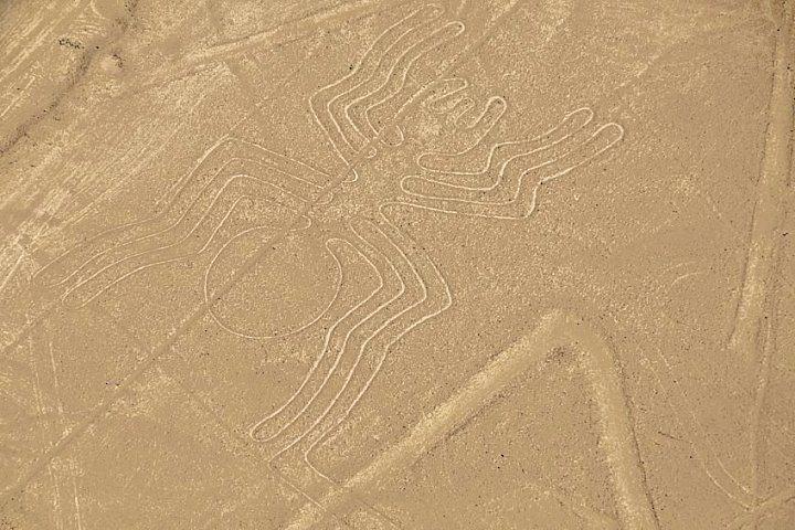 Nazca lijn: spin