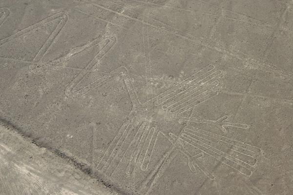 De pelikaan, een van de Nazca lijnen