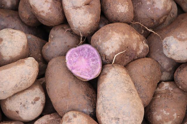 Peruaanse aardappel