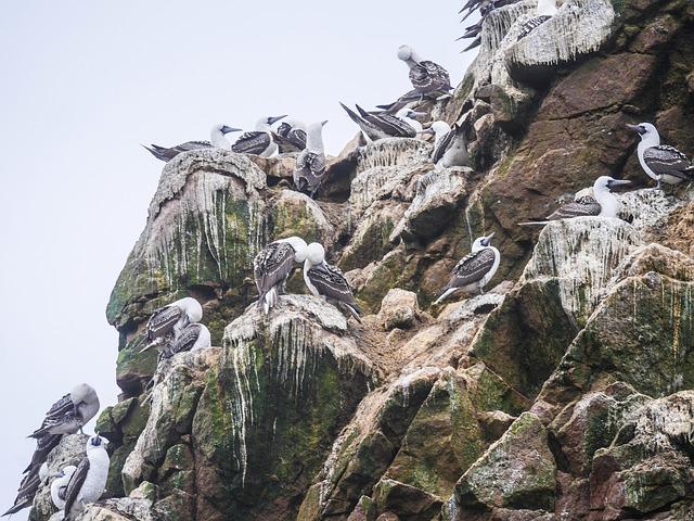 De poep van Paracas
