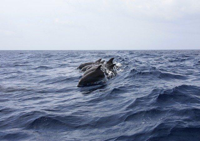 Dolfijnen werden door de inca's gegeten